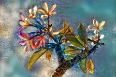 TropicalFlowers_ddg1