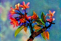 TropicalFlowers_ddg2