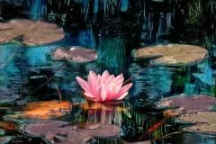 lotuspond2