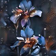 Iris flowers – blue ambience