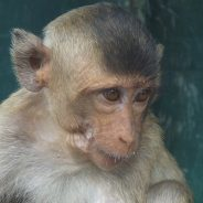 Portrait of a monkey